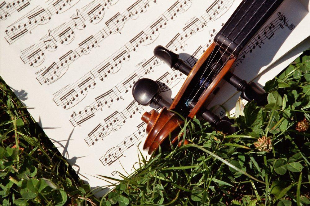Violine Bild4 (c) FMV